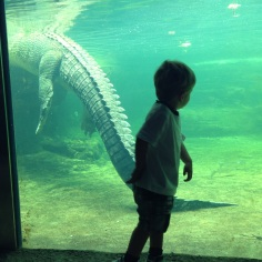 Xavier just realised he was standing in front of a 5 meter Crocodile.
